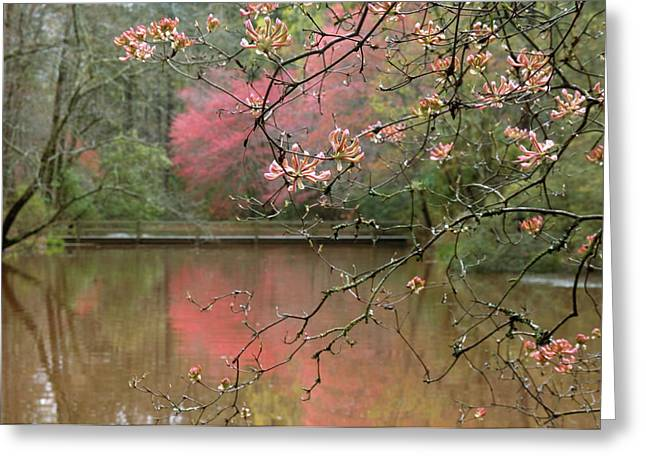 Usa, Georgia, Callaway Gardens, Azalea Greeting Card by Jaynes Gallery