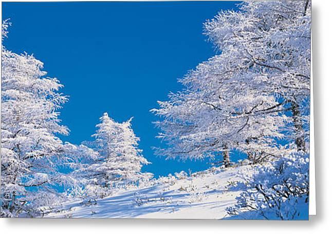 Snow-covered Landscape Greeting Cards - Utsukushigahara Nagano Japan Greeting Card by Panoramic Images