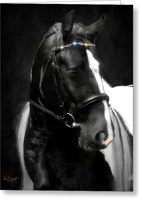 Gypsy Horse Greeting Cards - Valentinos Bling Greeting Card by Fran J Scott
