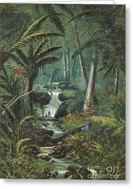 Human Tree Greeting Cards - Valley In Tasmania, 19th Century Greeting Card by King