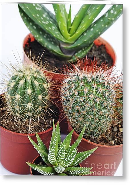 Varied Mini Cactus In Pots Greeting Card by Sami Sarkis