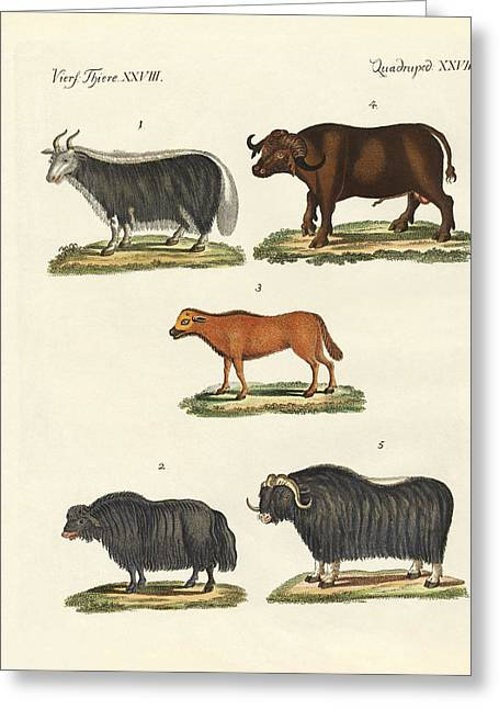 Yak Greeting Cards - Various kinds of oxen Greeting Card by Splendid Art Prints