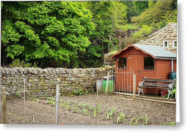 Shed Photographs Greeting Cards - Vegetable garden Greeting Card by Tom Gowanlock
