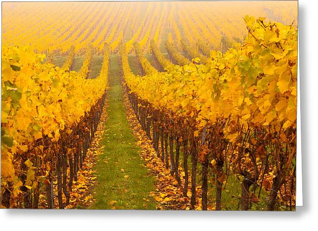 Alsace Greeting Cards - Vine Crop In A Vineyard, Riquewihr Greeting Card by Panoramic Images