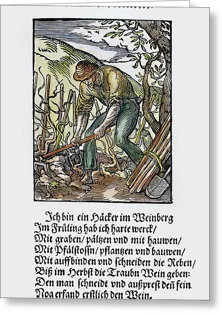 Vinegrower, 1568 Greeting Card by Granger