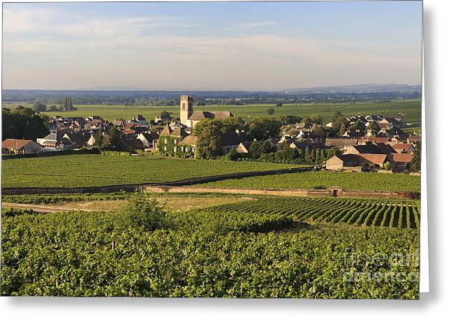 Vineyard and village of Pommard. Cote d'Or. Route des grands crus. Burgundy. France. Europe Greeting Card by BERNARD JAUBERT