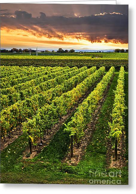 Vineyard Photographs Greeting Cards - Vineyard at sunset Greeting Card by Elena Elisseeva