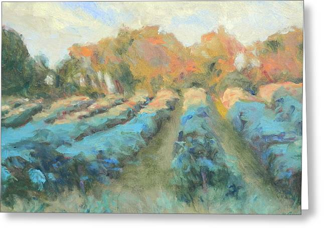 Grape Vineyards Greeting Cards - Vineyard Evening Greeting Card by Michael Camp