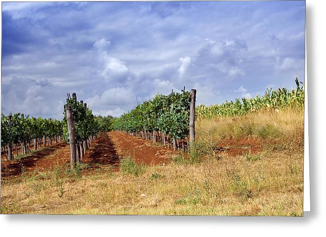 Wine Pyrography Greeting Cards - Vineyard Greeting Card by Modern Art Prints