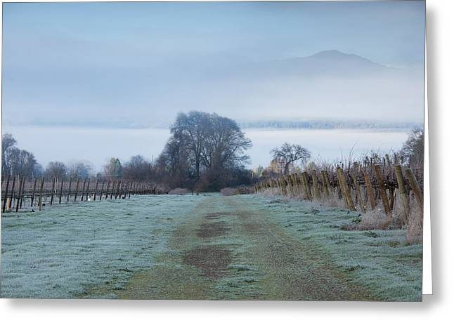 Vineyard Landscape Greeting Cards - Vineyard In Winter During Fog, Ukiah Greeting Card by Panoramic Images