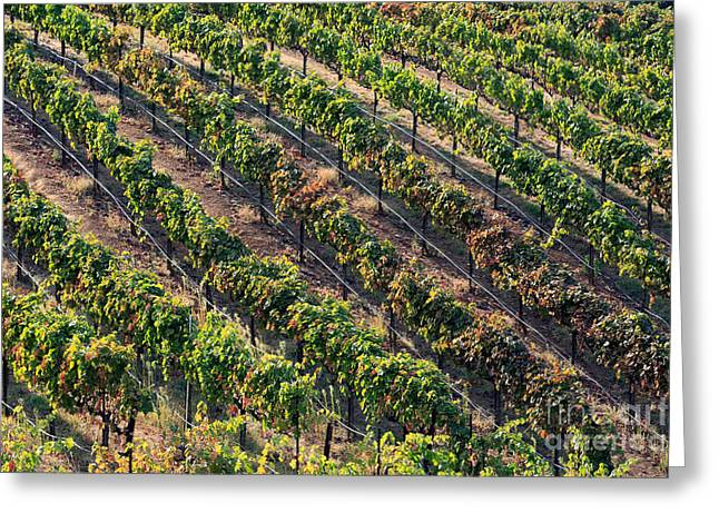 Red Wine Prints Greeting Cards - Vineyard Greeting Card by Mariusz Blach