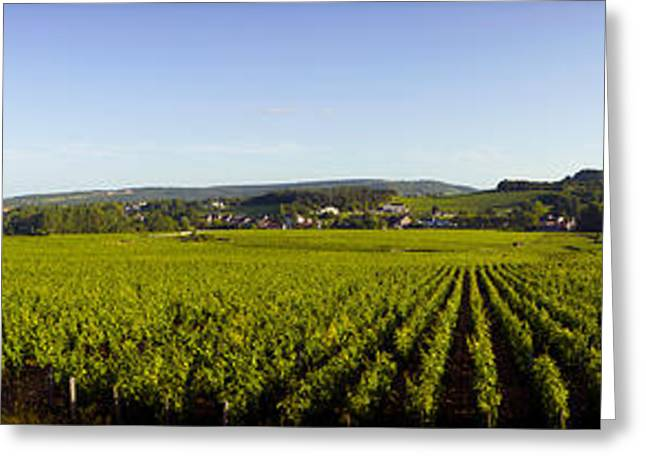 Vineyard Landscape Greeting Cards - Vineyard, Mercurey, France Greeting Card by Panoramic Images