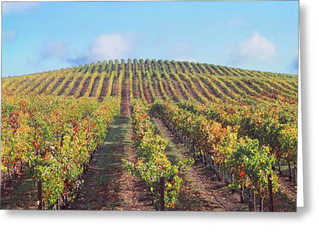 Winemaking Photographs Greeting Cards - Vineyard, Napa Valley, California, Usa Greeting Card by Panoramic Images