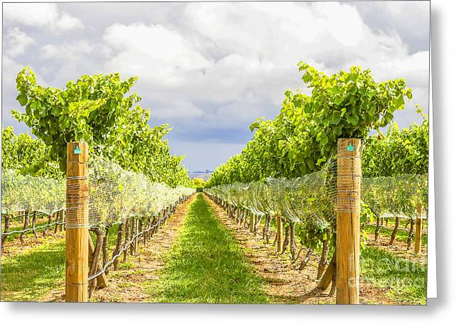 Cabernet Sauvignon Greeting Cards - Vineyard Greeting Card by Patricia Hofmeester