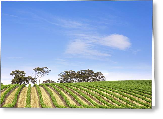 Clare Greeting Cards - Vineyard South Australia Square Greeting Card by Colin and Linda McKie