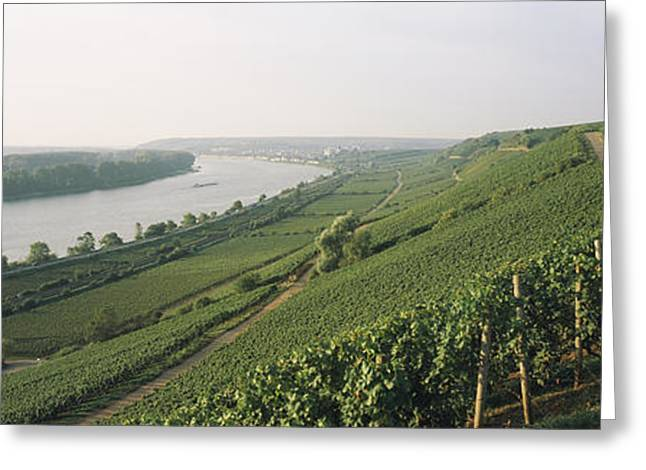 Vitis Greeting Cards - Vineyards Along A River, Niersteiner Greeting Card by Panoramic Images