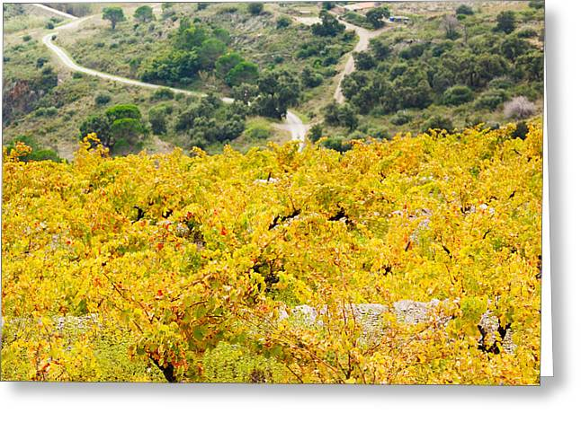 Vineyard Landscape Greeting Cards - Vineyards, Collioure, Vermillion Coast Greeting Card by Panoramic Images