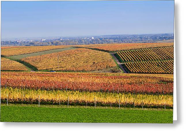 Vineyard Landscape Greeting Cards - Vineyards In Autumn Near Gleisweiler Greeting Card by Panoramic Images