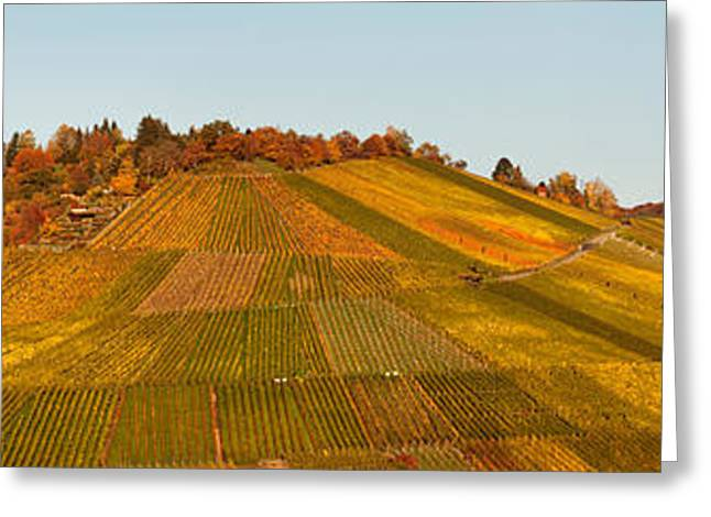 Vineyard Landscape Greeting Cards - Vineyards In Autumn, Uhlbach Greeting Card by Panoramic Images
