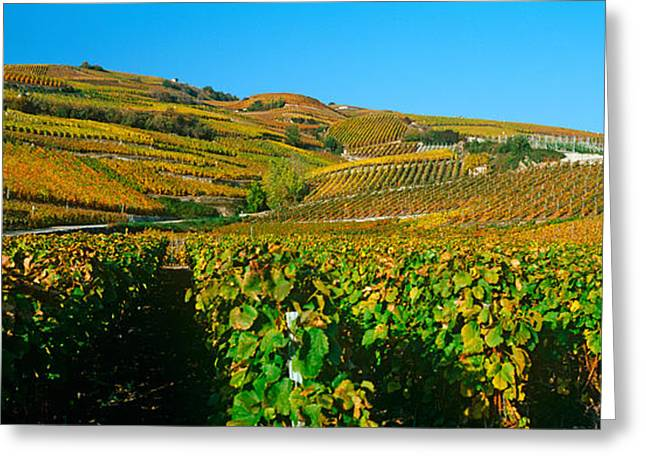 Viniculture Greeting Cards - Vineyards In Autumn, Valais Canton Greeting Card by Panoramic Images