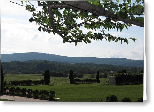 Glasses Greeting Cards - Vineyards in VA - 12124 Greeting Card by DC Photographer