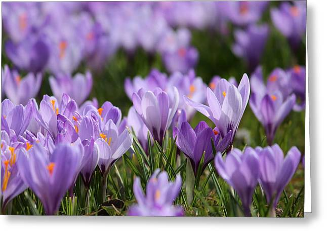 Bloomers Greeting Cards - Violet Greeting Card by Heike Hultsch