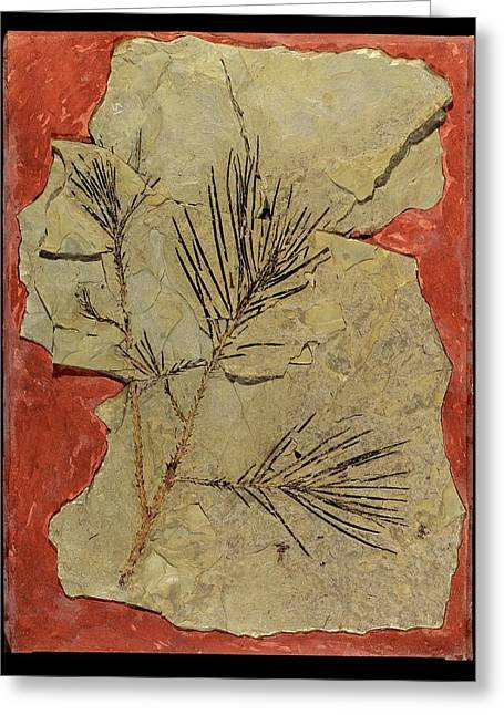 Voltzia Conifer Fossil Greeting Card by Gilles Mermet
