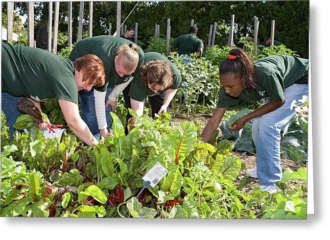 Volunteers In A Community Garden Greeting Card by Jim West