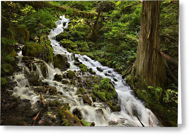 Recently Sold -  - Stream Greeting Cards - Wahkeena Creek Greeting Card by Mary Jo Allen