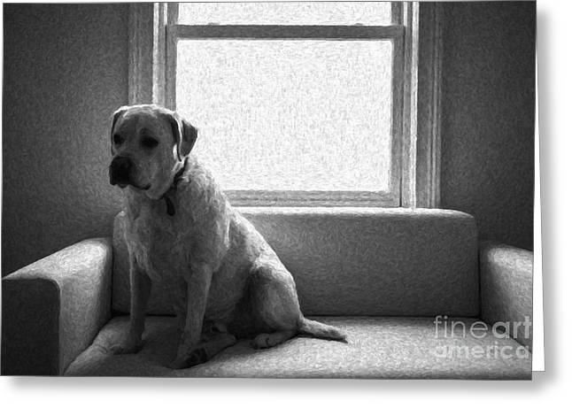 Labrador Retriever Photographs Greeting Cards - Waiting Greeting Card by Diane Diederich