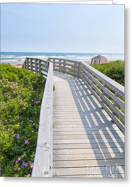 Rose Tower Greeting Cards - Walkway to ocean beach Greeting Card by Elena Elisseeva