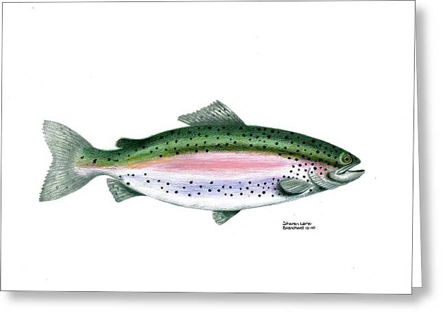 Rainbow Trout Drawings Greeting Cards - Wallace Brantley Sport Fishing Series Rainbow Trout Greeting Card by Sharon Blanchard