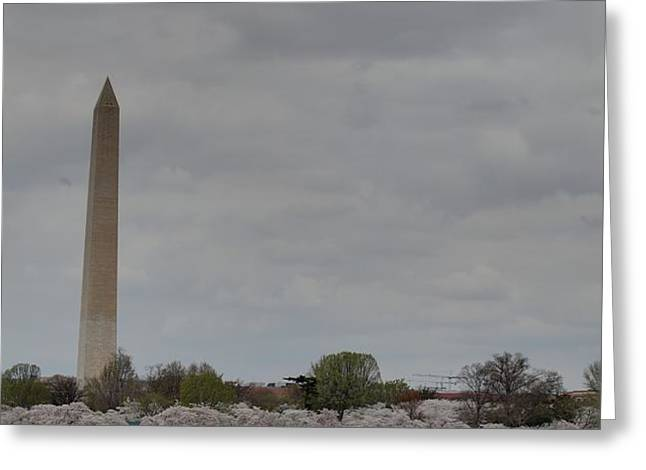 Washington Monument - Cherry Blossoms - Washington DC - 011313 Greeting Card by DC Photographer