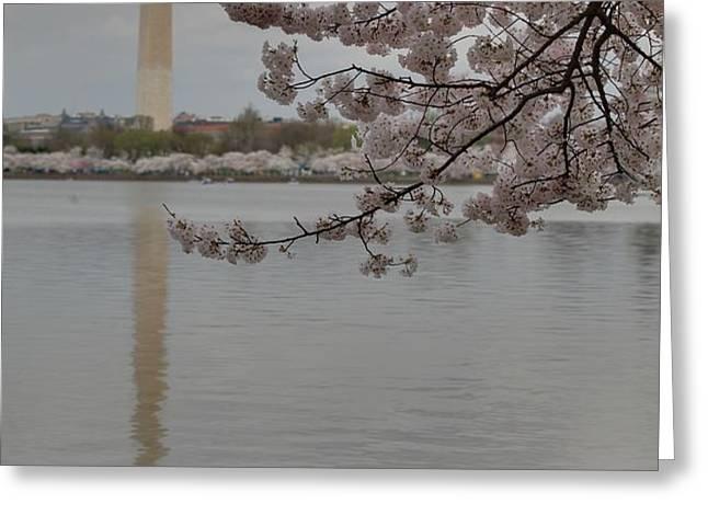 Washington Monument - Cherry Blossoms - Washington DC - 011317 Greeting Card by DC Photographer