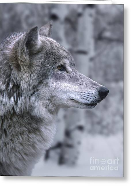 Canid Greeting Cards - Watching And Waiting Greeting Card by Sandra Bronstein