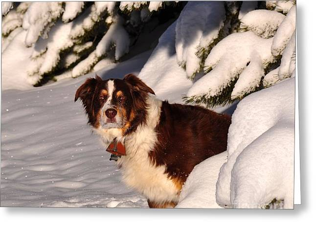 Dogs In Snow. Greeting Cards - Watching You Greeting Card by Susan Chesnut