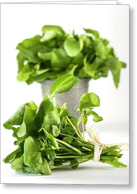 Water Cress Greeting Card by Aberration Films Ltd
