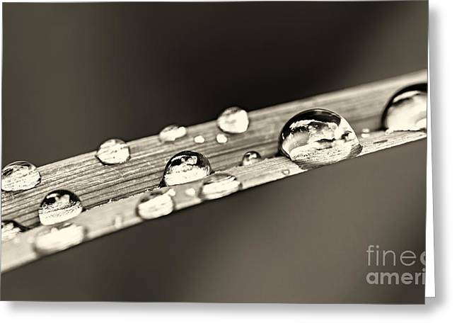 Drops Greeting Cards - Water drops on grass blade Greeting Card by Elena Elisseeva
