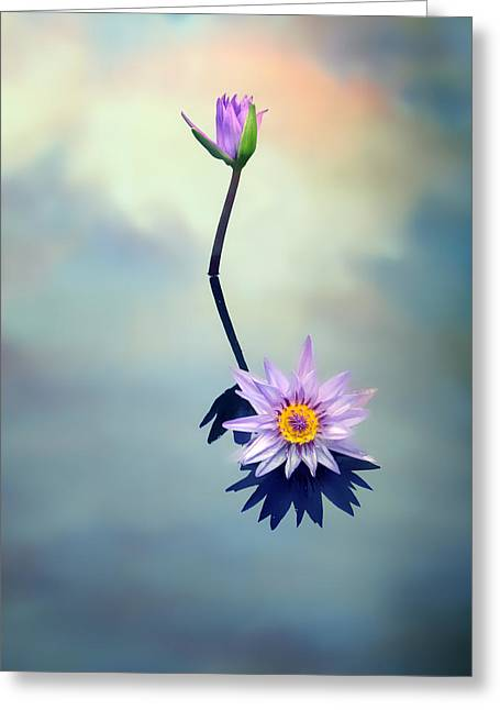 Floating Flowers Greeting Cards - Water Lily Greeting Card by Jessica Jenney