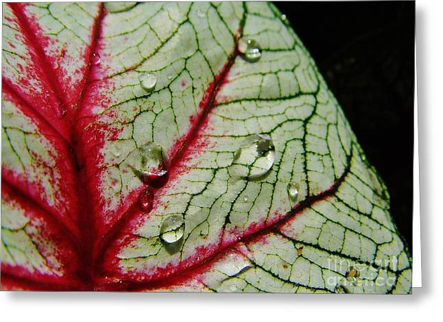 Moisture On Plants Photographs Greeting Cards - Water On The Leaf Greeting Card by D Hackett