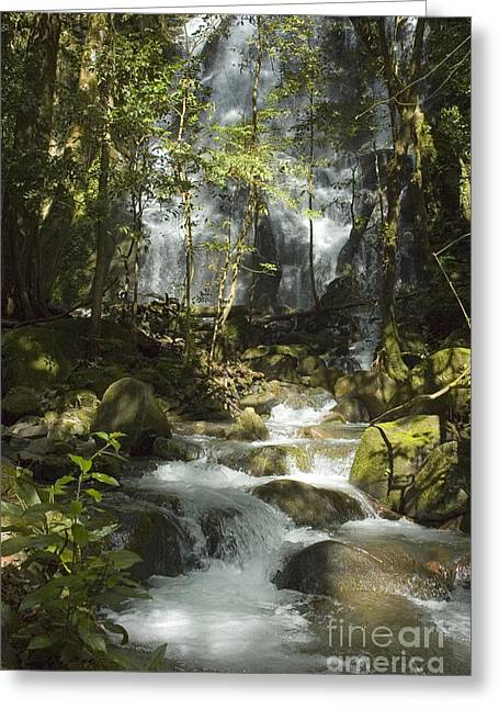 Rincon Greeting Cards - Waterfall in Costa Rica Greeting Card by Vanessa Devolder