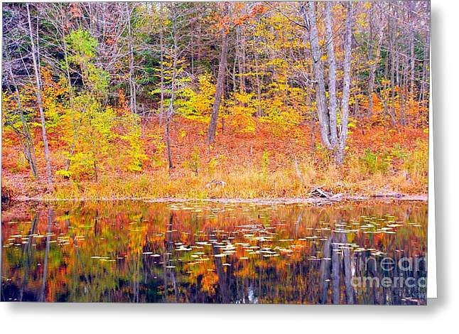 Fall Trees Greeting Cards - Waterfront Reflection Greeting Card by Terri Gostola