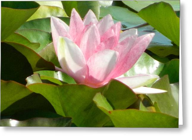 Mix Medium Sculptures Greeting Cards - Waterlilly Greeting Card by Gunter  Hortz