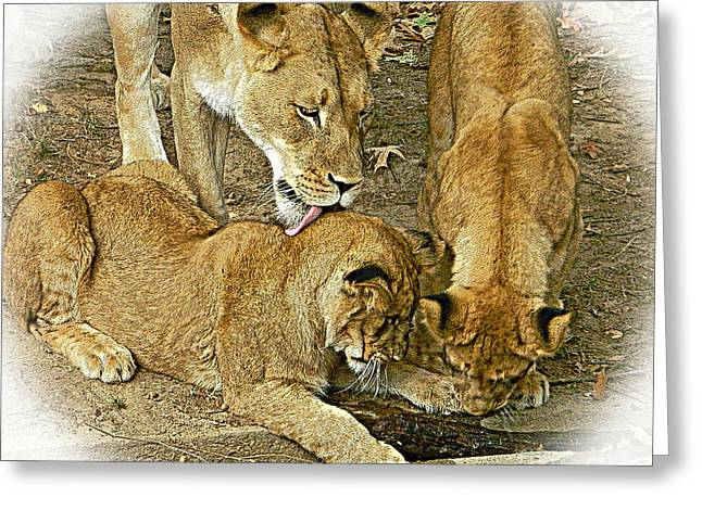 """""""we Are Family"""" Greeting Cards - We Are Family - Lioness And Cubs 2 Greeting Card by Emmy Marie Vickers"""