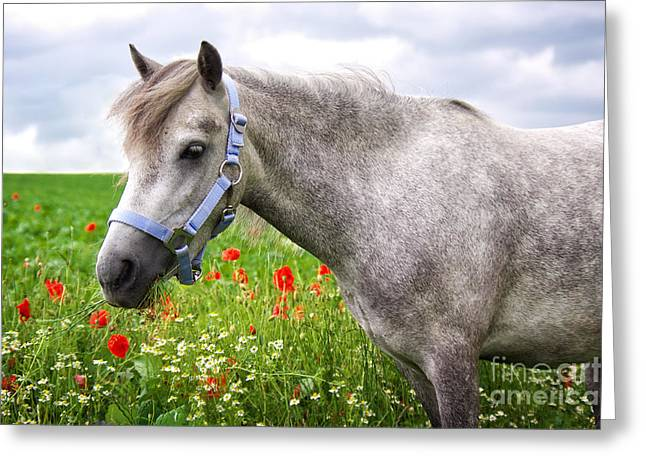 Horse Images Greeting Cards - Welsh Pony Greeting Card by Angela Doelling AD DESIGN Photo and PhotoArt