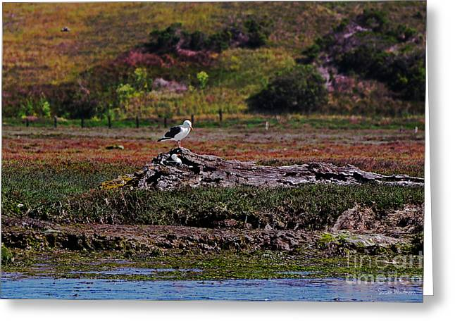 Susan Wiedmann Greeting Cards - Western Gulls Nesting in a Log Greeting Card by Susan Wiedmann