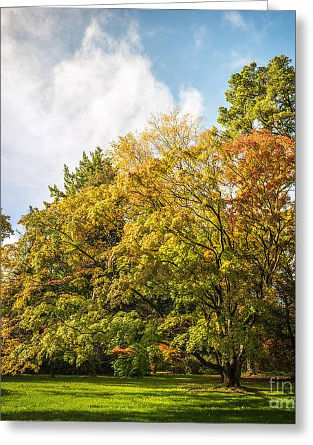 Fall Grass Greeting Cards - Westonbirt Arboretum Greeting Card by Amanda And Christopher Elwell
