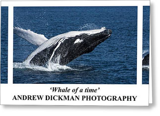 Whale Photographs Greeting Cards - Whale of a time Greeting Card by Andrew Dickman