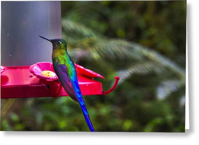 Hovering Greeting Cards - What Is My Name Greeting Card by Al Bourassa
