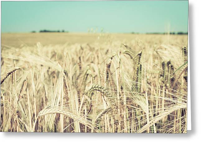 Breezy Greeting Cards - Wheat crop Greeting Card by Tom Gowanlock
